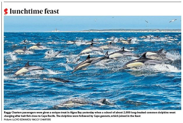 common_dolphins_29_oct_2020_herald_front_page_2.jpg