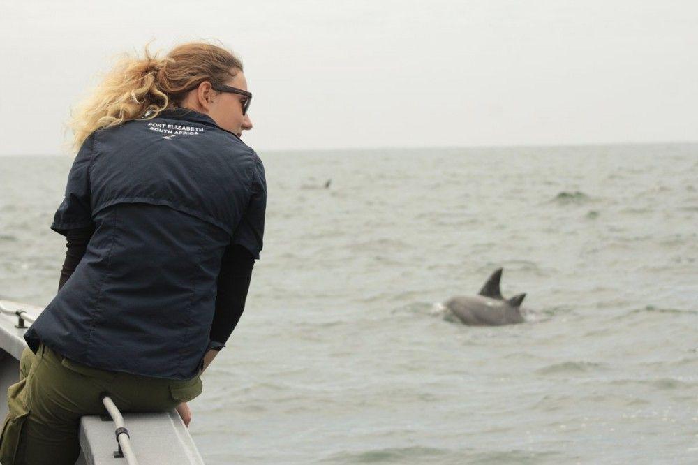 ewa_dolphins.jpg
