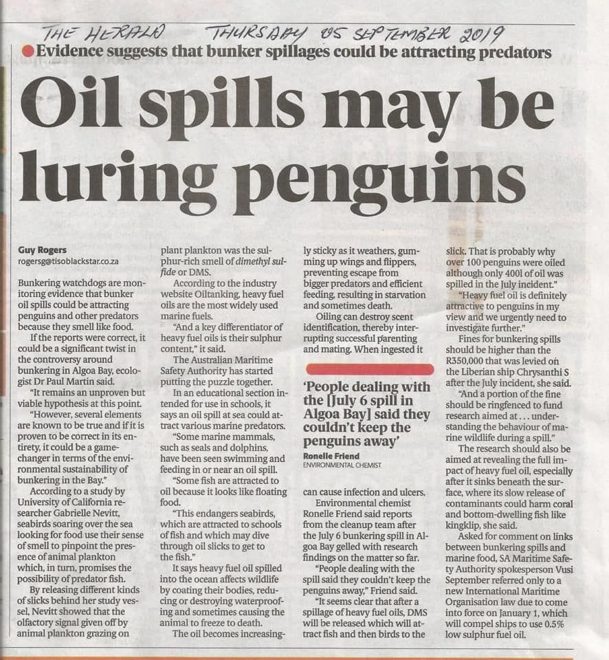 july_oil_spill_herald_article_penguins.jpg