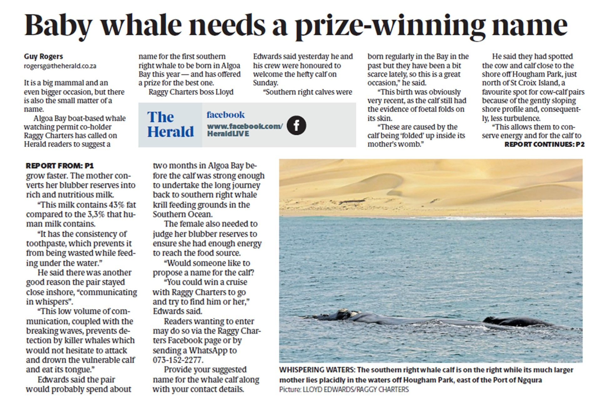 the_herald_27july2021_baby_whale_needs_a_prize_winning_name.jpg