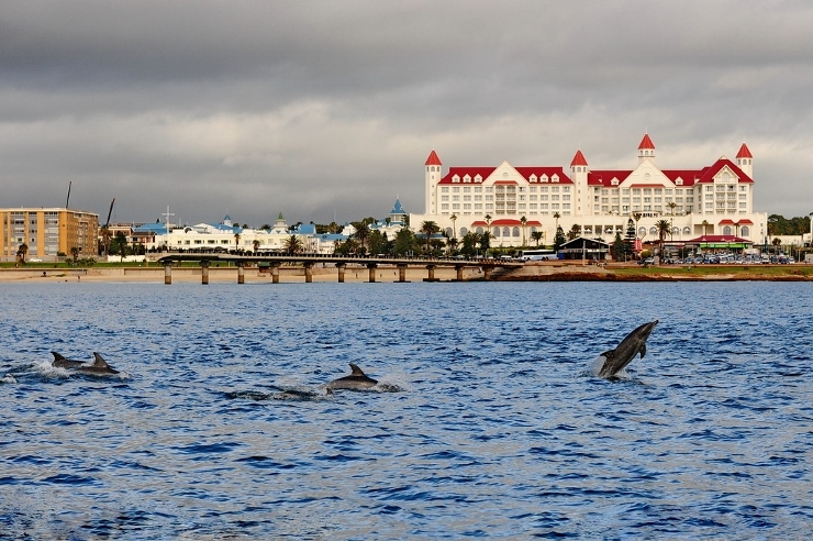 Bottlenose Dolphins in front of the Boardwalk Hotel
