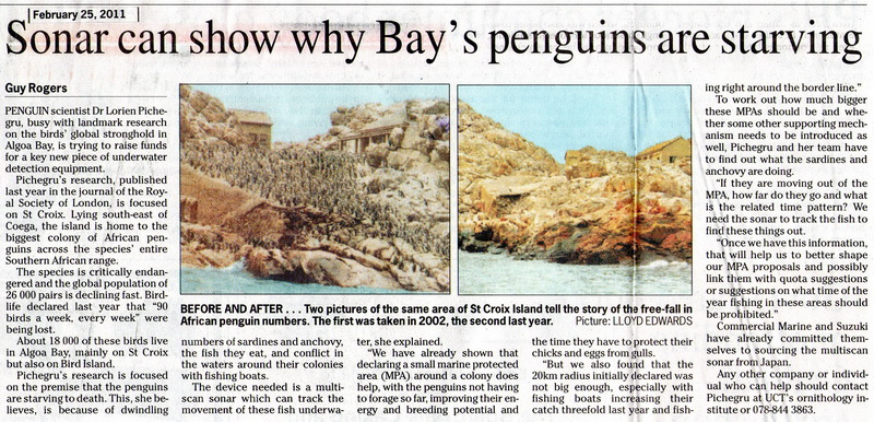 Sonar can assist in revealing why Algoa Bay's penguin population is falling due to starvation.