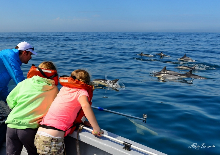 Guests with Common Dolphins