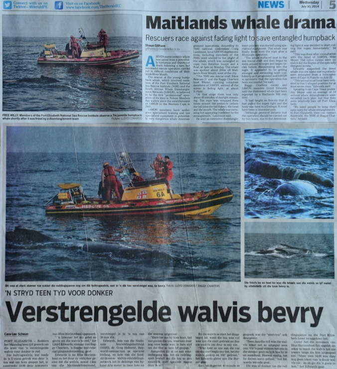 Humpback release in the news