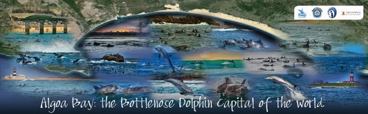 Bottlenose Dolphin Capital