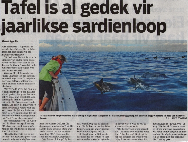 Sardine Run Article in Die Burger