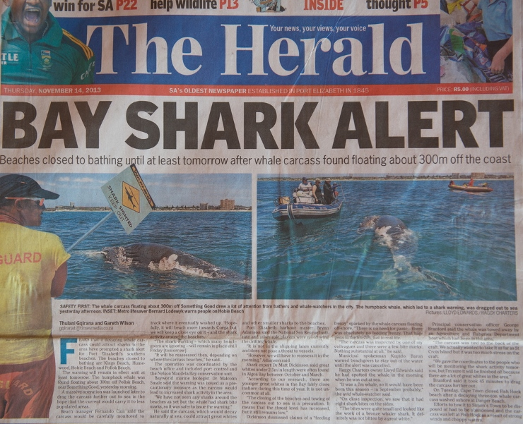 Shark Alert for Port Elizabeth