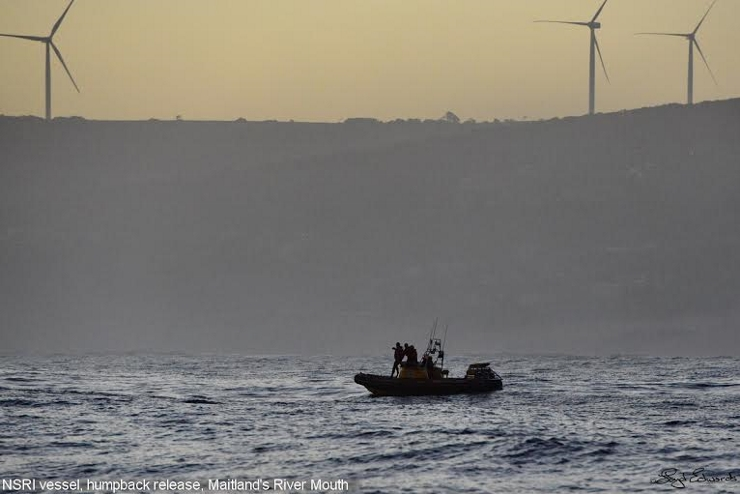 NSRI with humpback whale off Maitlands