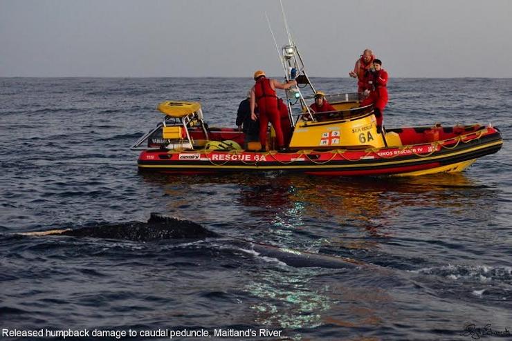 NSRI helping humpback whale