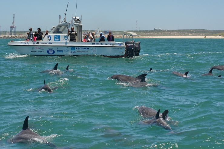 Winkle with Bottlenose Dolphins